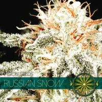 Purchase RUSSIAN SNOW