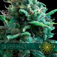 Purchase SILVER HAZE