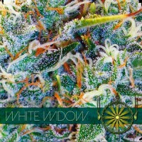 Purchase WHITE WIDOW