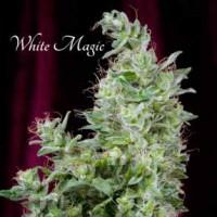 Purchase  White Magic