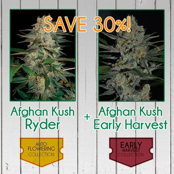 Afghan Kush Pack - Fast - WORLDOFSEEDS - SPECIAL COLLECTIONS
