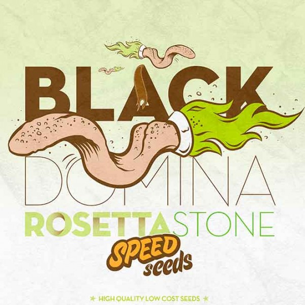 BLACK DOMINA X ROSETTA STONE - SPEED SEEDS