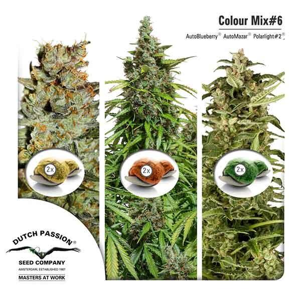 Colour Mix 6 (AutoFem) - DUTCH PASSION