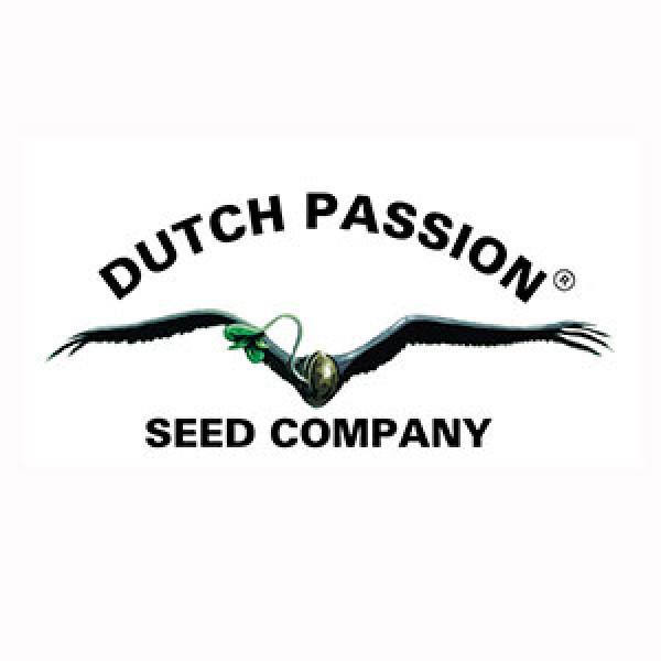 Power Light #3 - 3 Seeds Fem - DUTCH PASSION