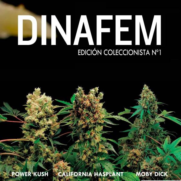Edición  coleccionista Nº1 6 semillas - DINAFEM SEEDS
