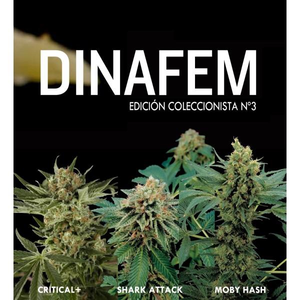 Edición coleccionista Nº3 6 semillas - DINAFEM SEEDS