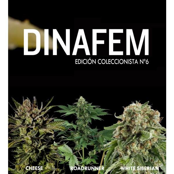 Edición coleccionista Nº6 6 semillas - DINAFEM SEEDS