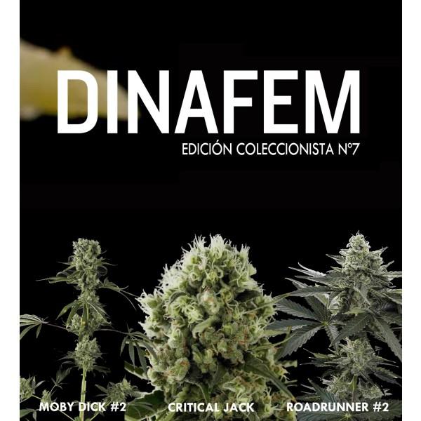 Edición coleccionista Nº7 6 semillas - DINAFEM SEEDS