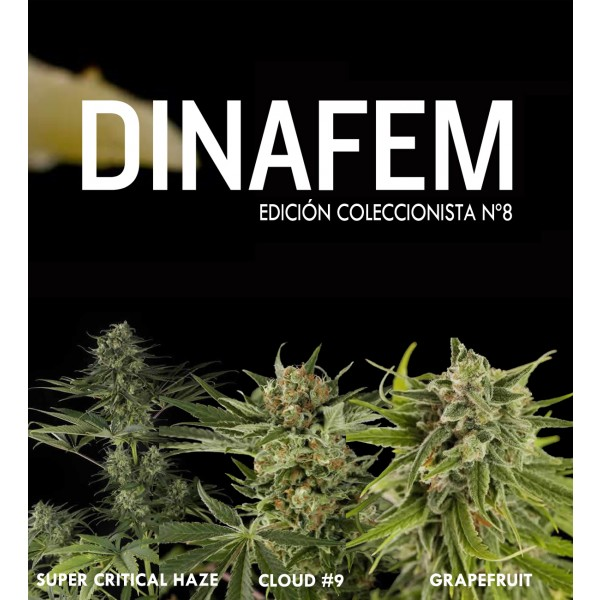 Edición coleccionista Nº8 6 semillas - DINAFEM SEEDS