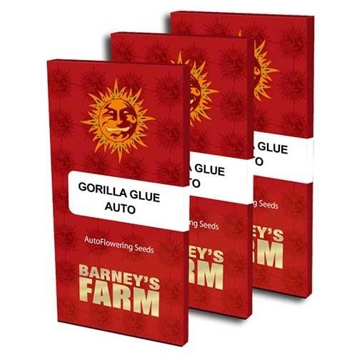 GORILLA GLUE AUTO - Autoflowering - BARNEY'S FARM