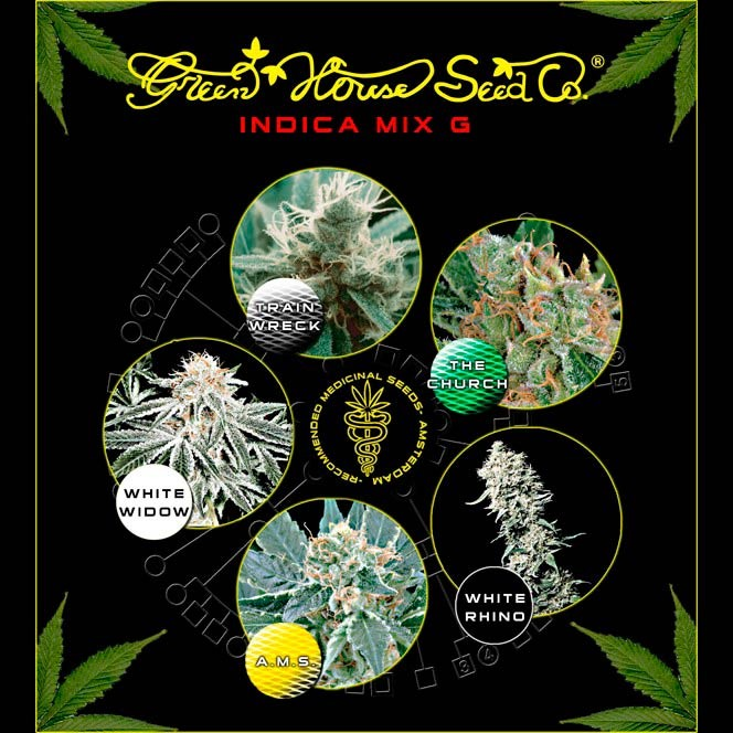 Indica Mix G - Collections - GREENHOUSE