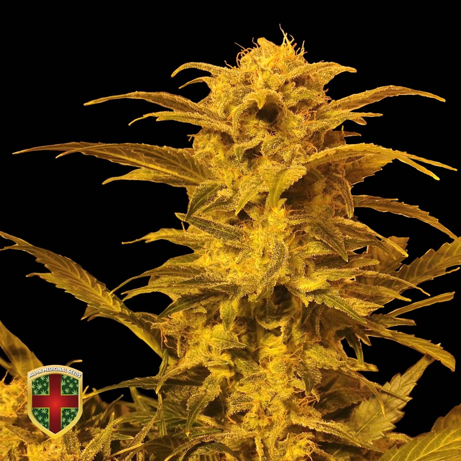 DESTROYER AUTO - 3 UND. FEM - ALL IN MEDICINAL