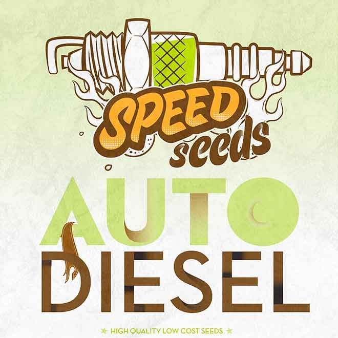DIESEL AUTO (SPEED SEEDS) - SPEED SEEDS
