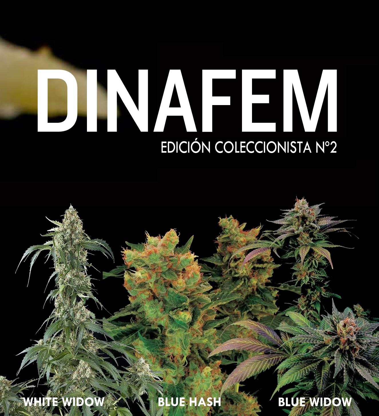 Edición coleccionista Nº2 6 semillas - Collections - DINAFEM SEEDS
