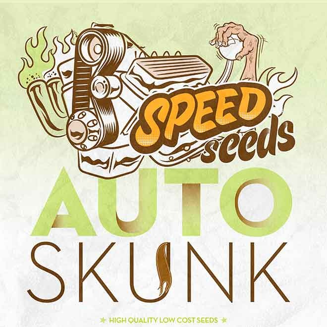 SKUNK AUTO (SPEED SEEDS) - SPEED SEEDS