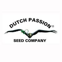 Purchase Power Light #3 - 3 Seeds Fem