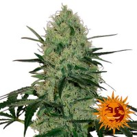 Purchase TANGERINE DREAM AUTO