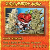 Purchase Strawberry AKeil - 6 seeds