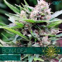 Purchase BONA DEA CBD+