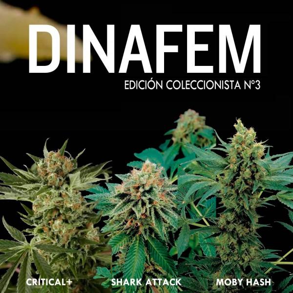 Edición  coleccionista Nº 3 - DINAFEM SEEDS