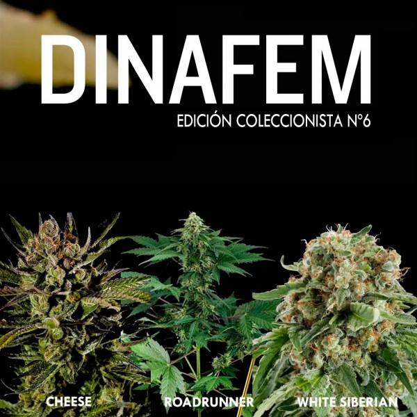 Edición coleccionista Nº 6 - DINAFEM SEEDS