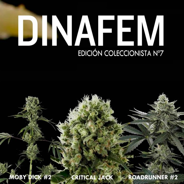 Edición Coleccionista Nº 7 - DINAFEM SEEDS