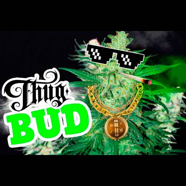 THUG BUD SELECTION - Root Catalog - Alle Produkte