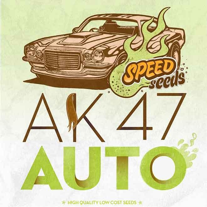 AK 47 AUTO (SPEED SEEDS)