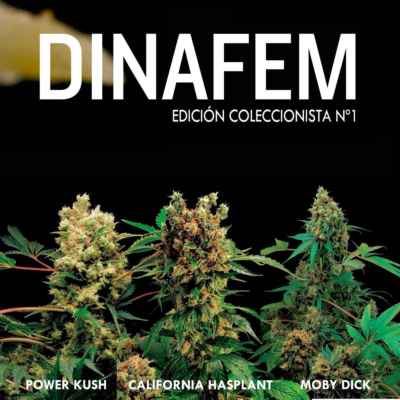Edición coleccionista Nº 1 - Collections - DINAFEM SEEDS