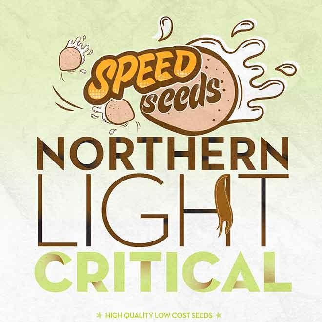 NORTHERN LIGHT X CRITICAL