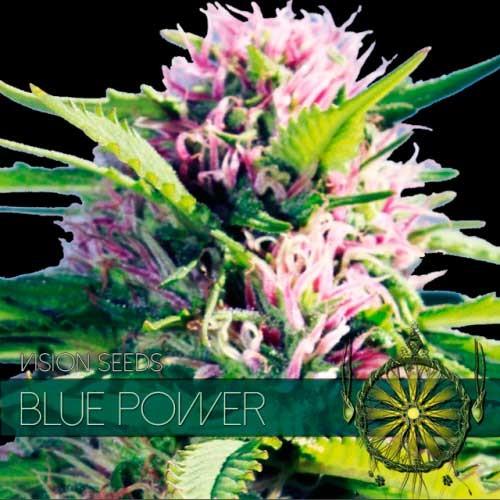 BLUE POWER - VISION SEEDS