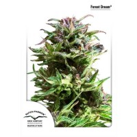 Purchase FOREST DREAM