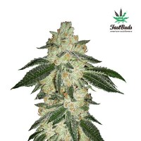 Purchase GREEN CRACK