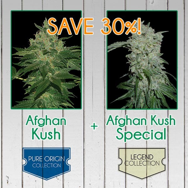 Afghan Kush Pack - Feminized - WORLDOFSEEDS - SPECIAL COLLECTIONS