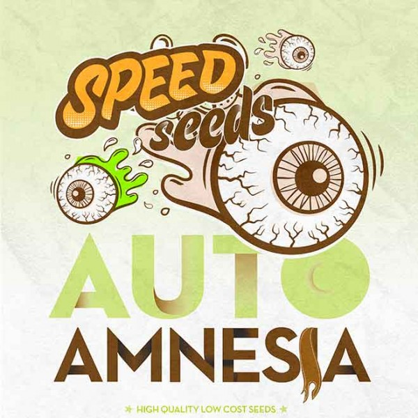 AMNESIA AUTO (SPEED SEEDS) - SPEED SEEDS