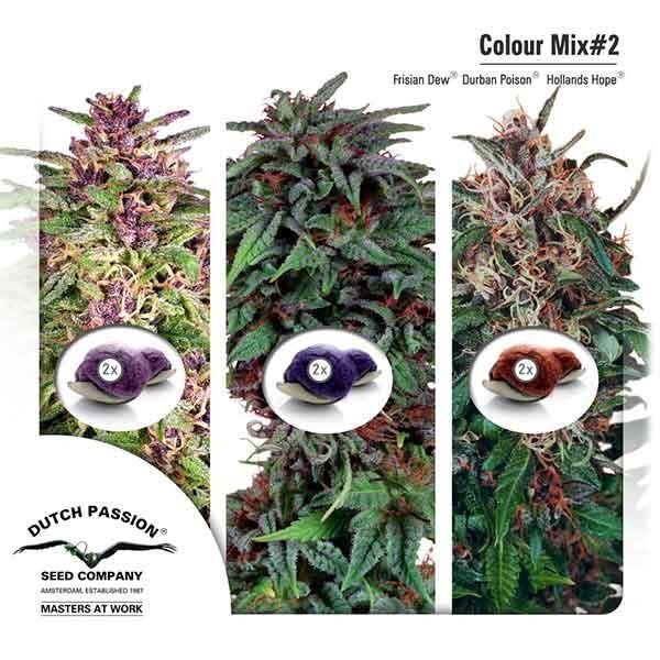 Colour Mix 2 - Root Catalog - Tous les Produits
