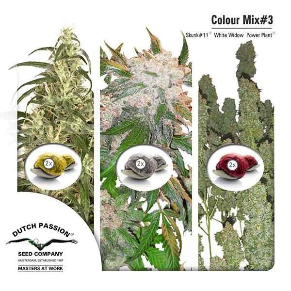Colour Mix 3 - Root Catalog - Tous les Produits