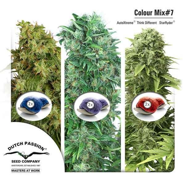 Colour Mix 7 (AutoFem) - DUTCH PASSION