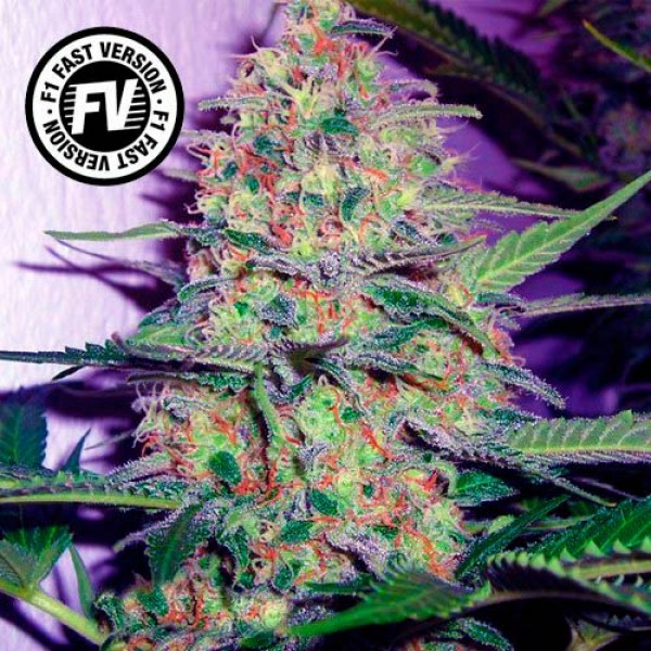 Green Poison Fast Version - SWEET SEEDS