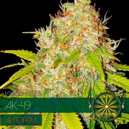 AK-49 AUTO - VISION SEEDS