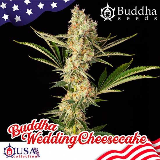 BUDDHA WEDDING CHEESECAKE