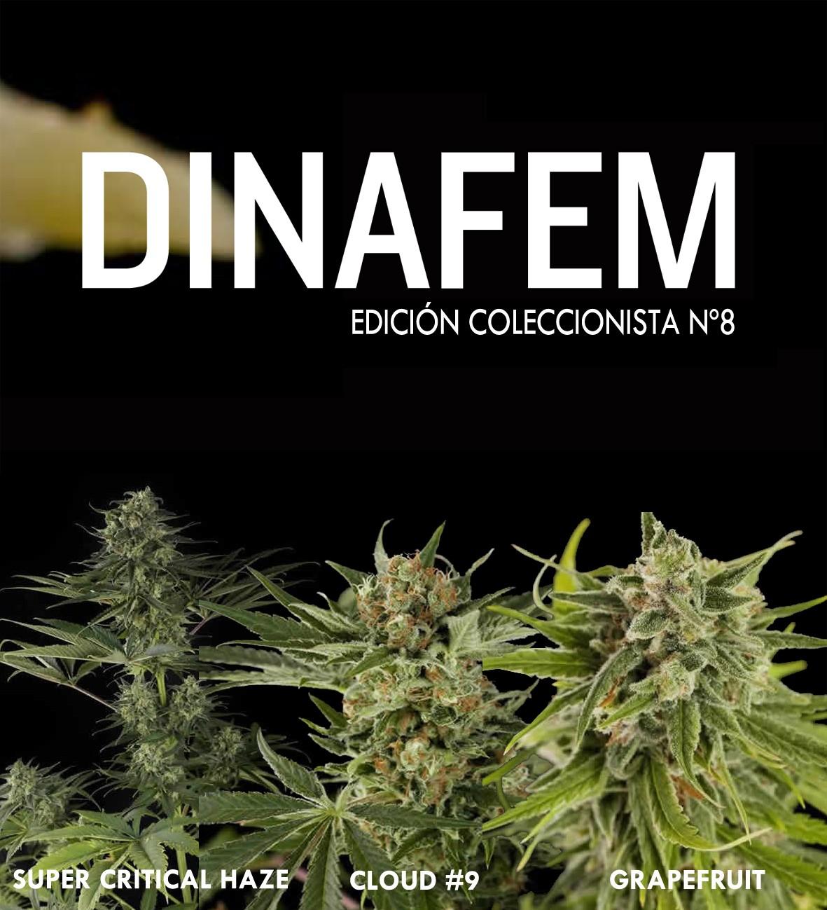 Dinafem collector # 8 6 graines