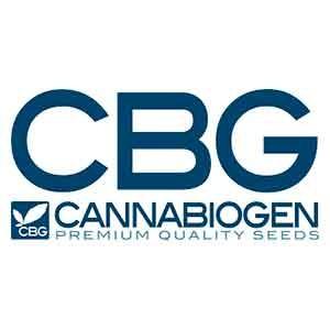 Mangobiche regular - 10 seeds - Cannabiogen