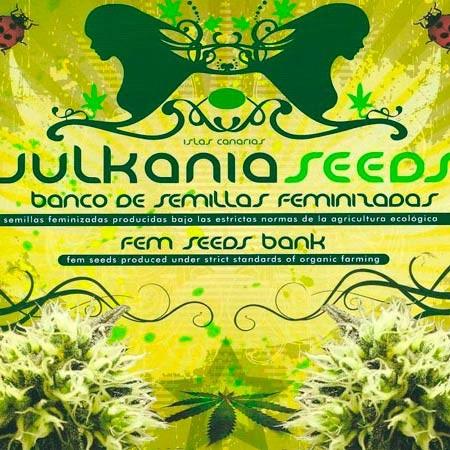 WHITE LINE PACK #2 - VULKANIA SEEDS