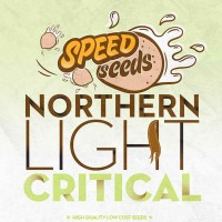 Purchase NORTHERN LIGHT X CRITICAL