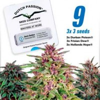 Purchase Dutch Outdoor Mix