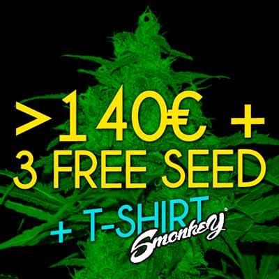 Free Amnesia Auto Seed
