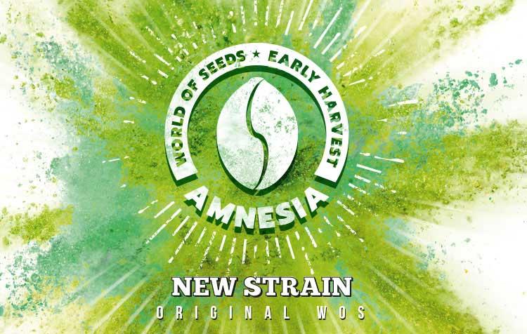 AMNESIA EARLY HARVEST