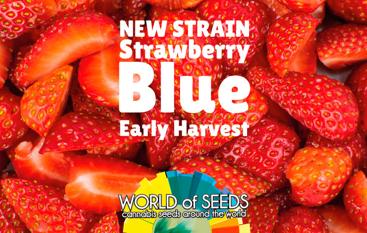 STRAWBERRY BLUE EARLY HARVEST