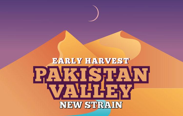 PAKISTAN VALLEY EARLY HARVEST